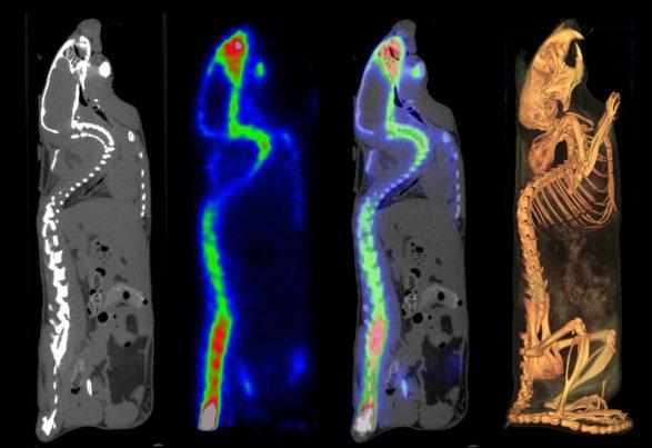MILabs - VECTor/CT (Simultan PET-SPECT) in der nuklearmedizinischen ...
